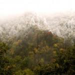 snow-foliage-3